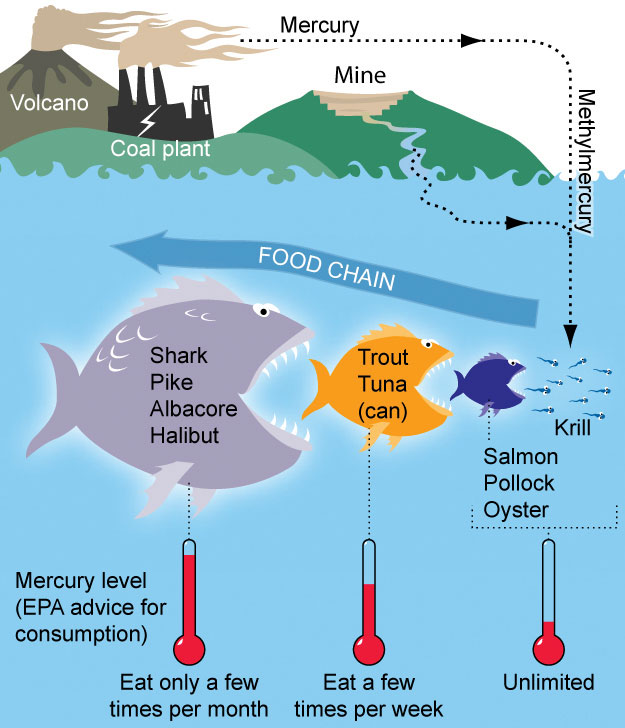 Seafood Mercury Graphic